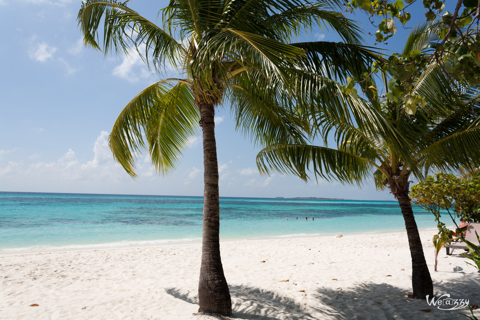 Petite balade sur les plages des maldives weazzy - Palmier noix de coco ...