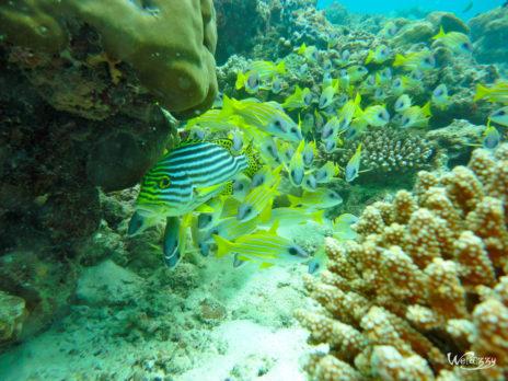 Maldives, diving