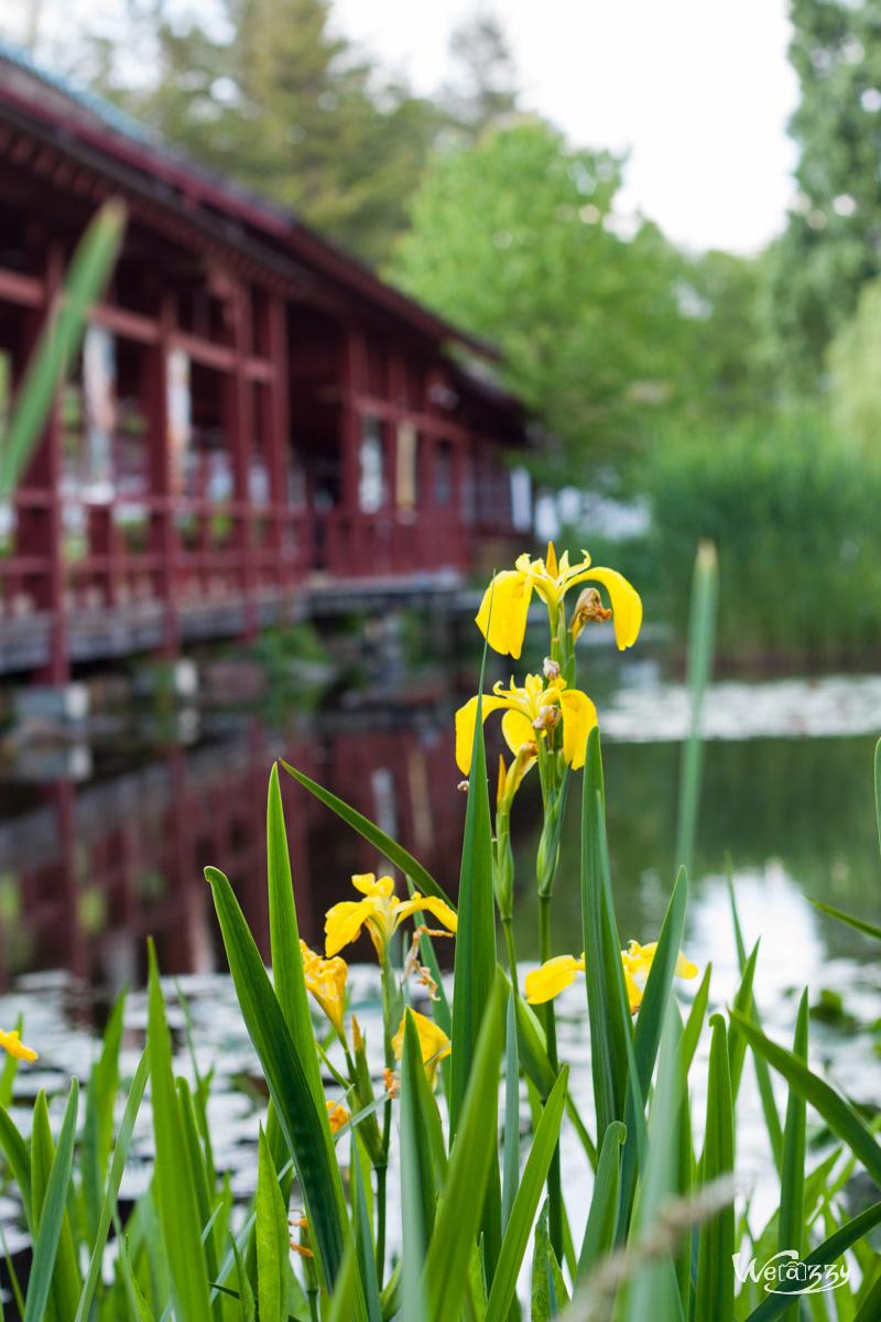 Fleur d'étang