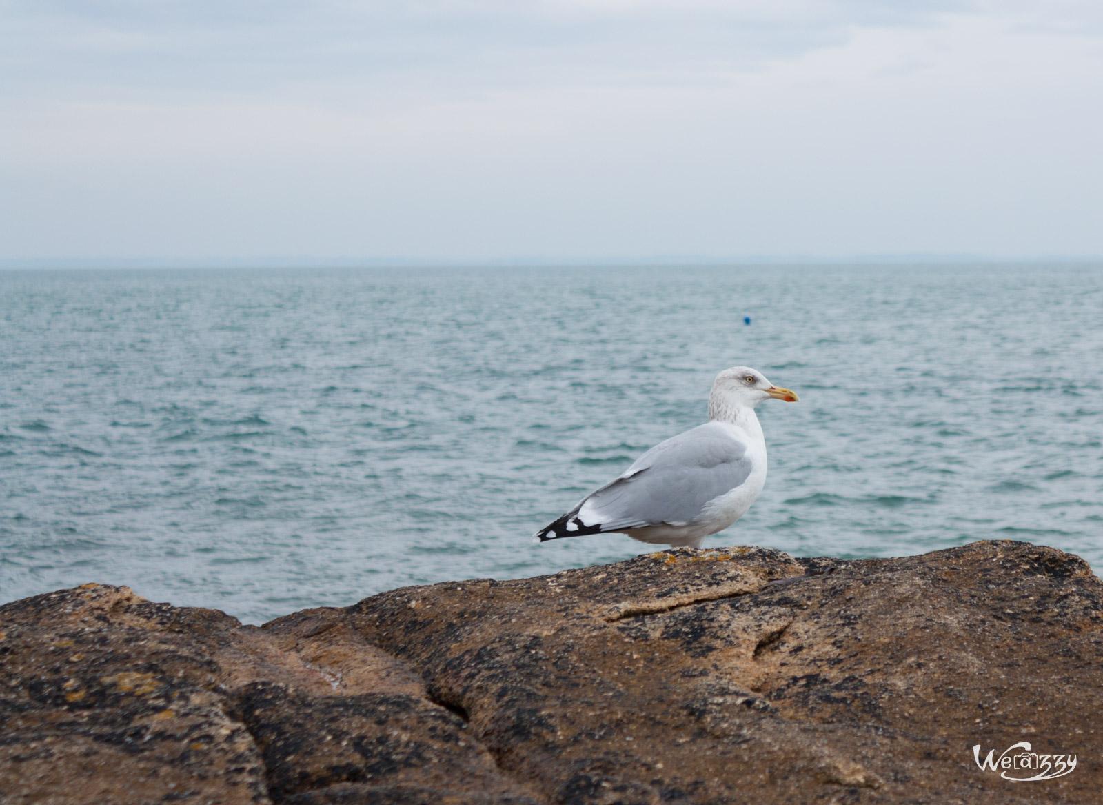 Le gardien des plages