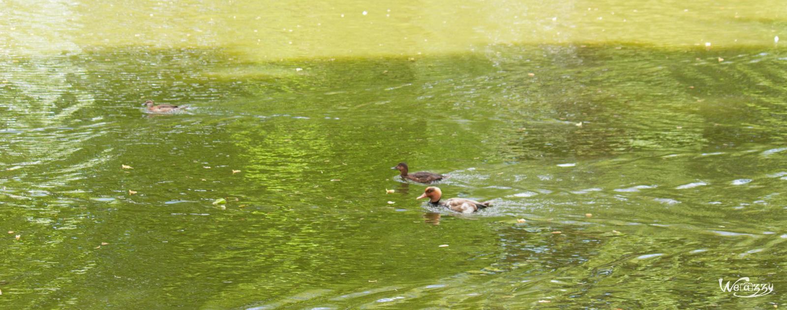 Course de canard 1