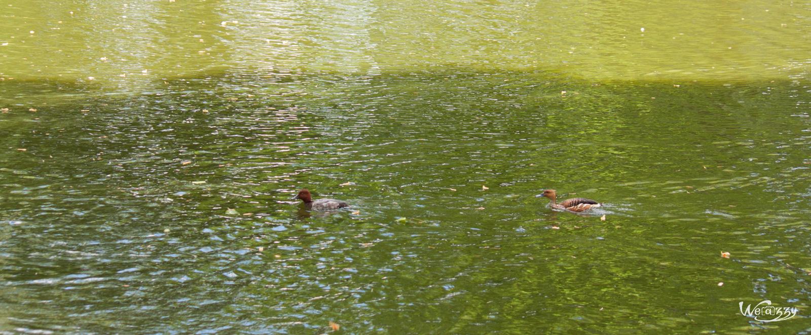 Course de canard 2