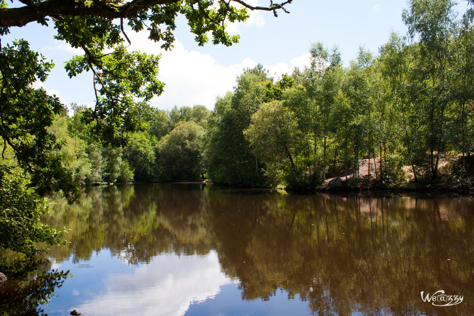 Brocéliande – Au coeur de la forêt légendaire