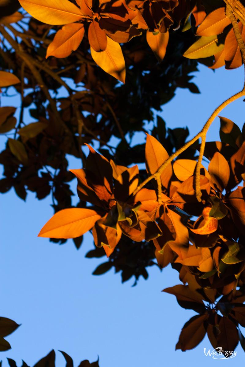 jardin-plantes-nocturne-1