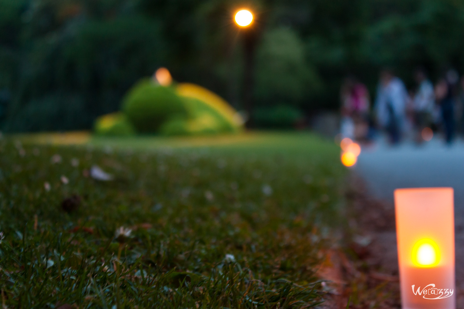 jardin-plantes-nocturne-8