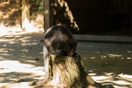 Animaux, France, Nantes, Zoo