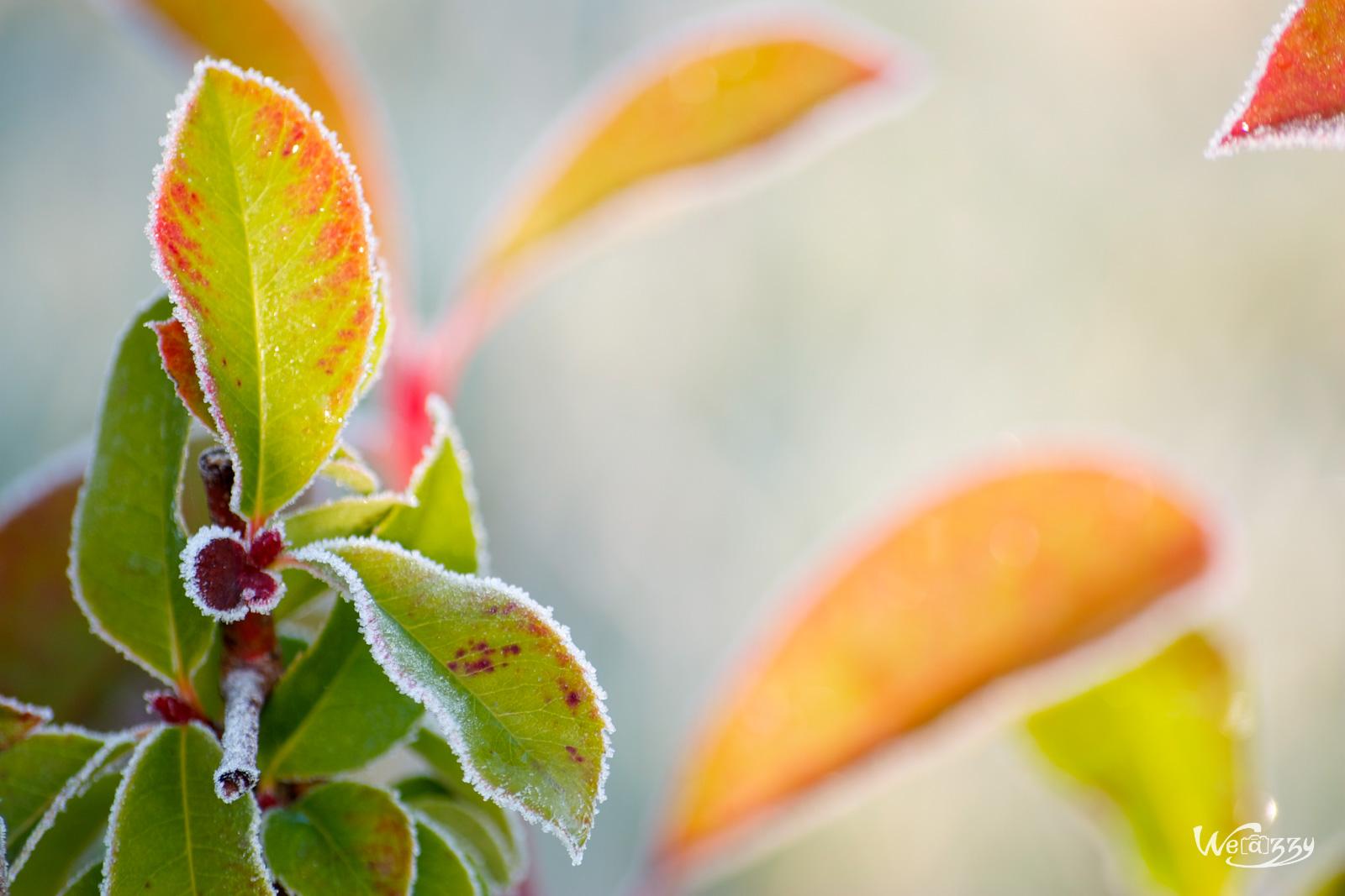 Bouquet de feuilles.jpg