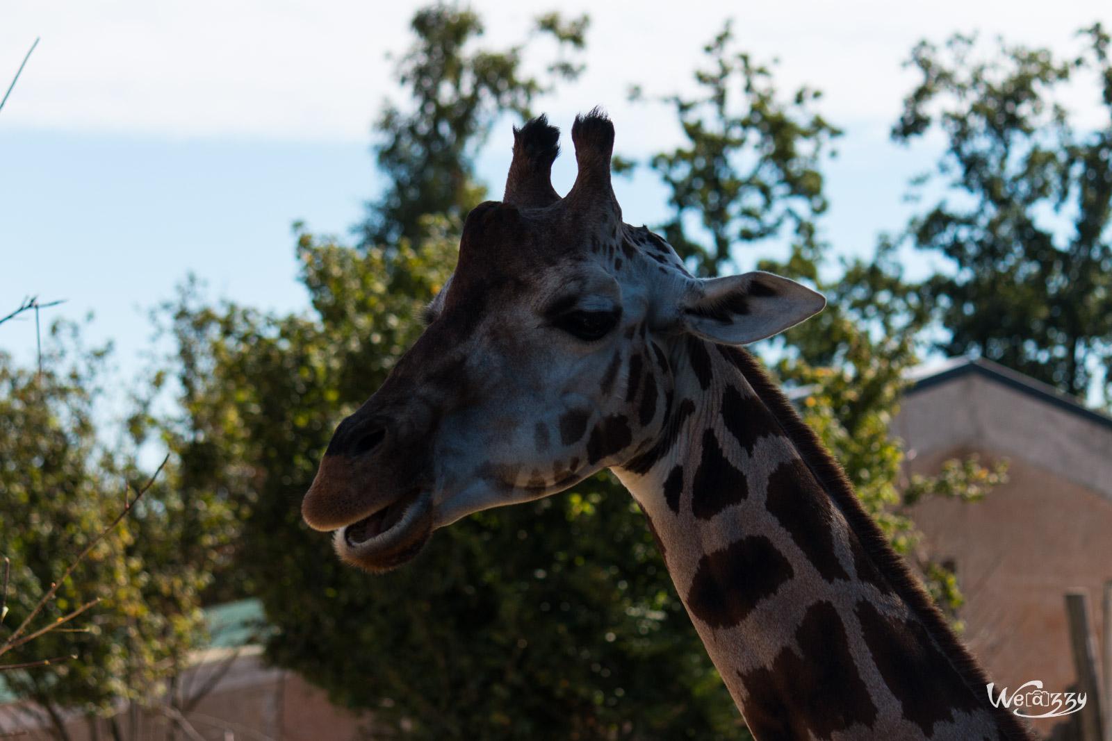 Animaux, Nantes, Zoo