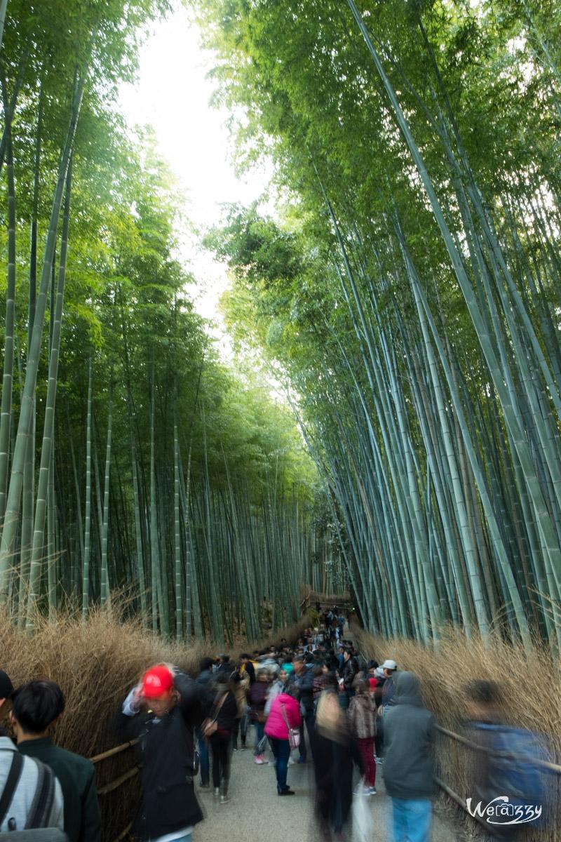 Japon, Kyoto, Voyage, Arashiyama, Bamboo Forest