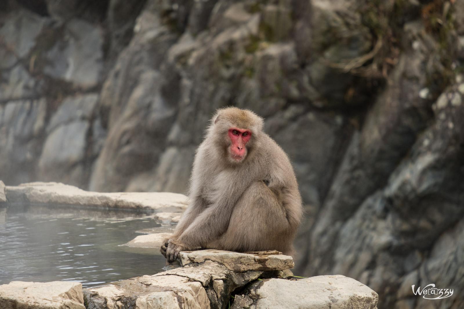 Japon, Jigokudani, Voyage