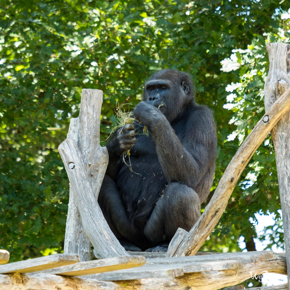 Animaux, Nature, Zoo, Parc zoologique