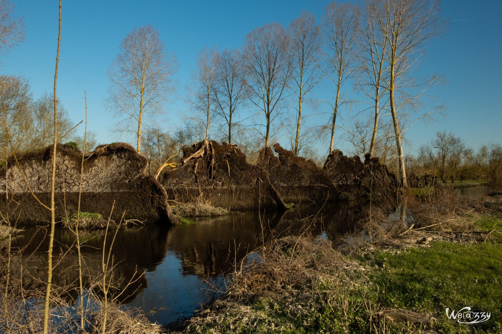 France, Marais, Nature, Poitevin, Vanneau-Irleau